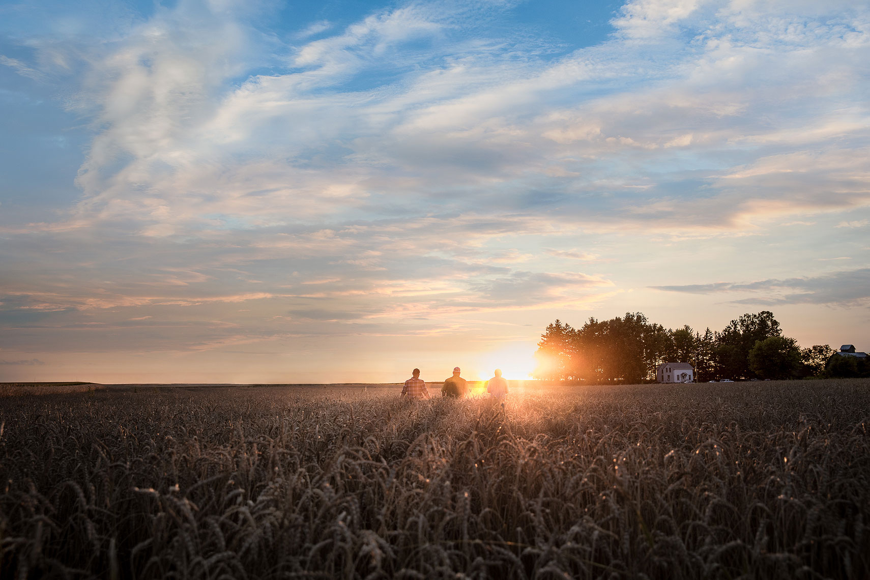 Sun setting behind a wheat field with farmers | Whiskey Acres Distillery | John Fedele Agricultural Photography